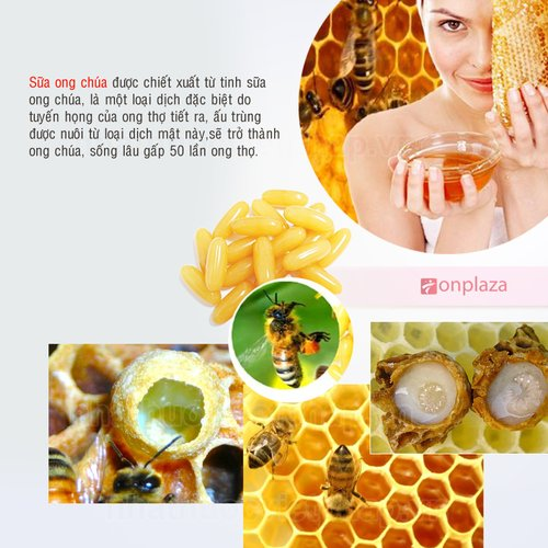 thành phần sữa ong chúa úc